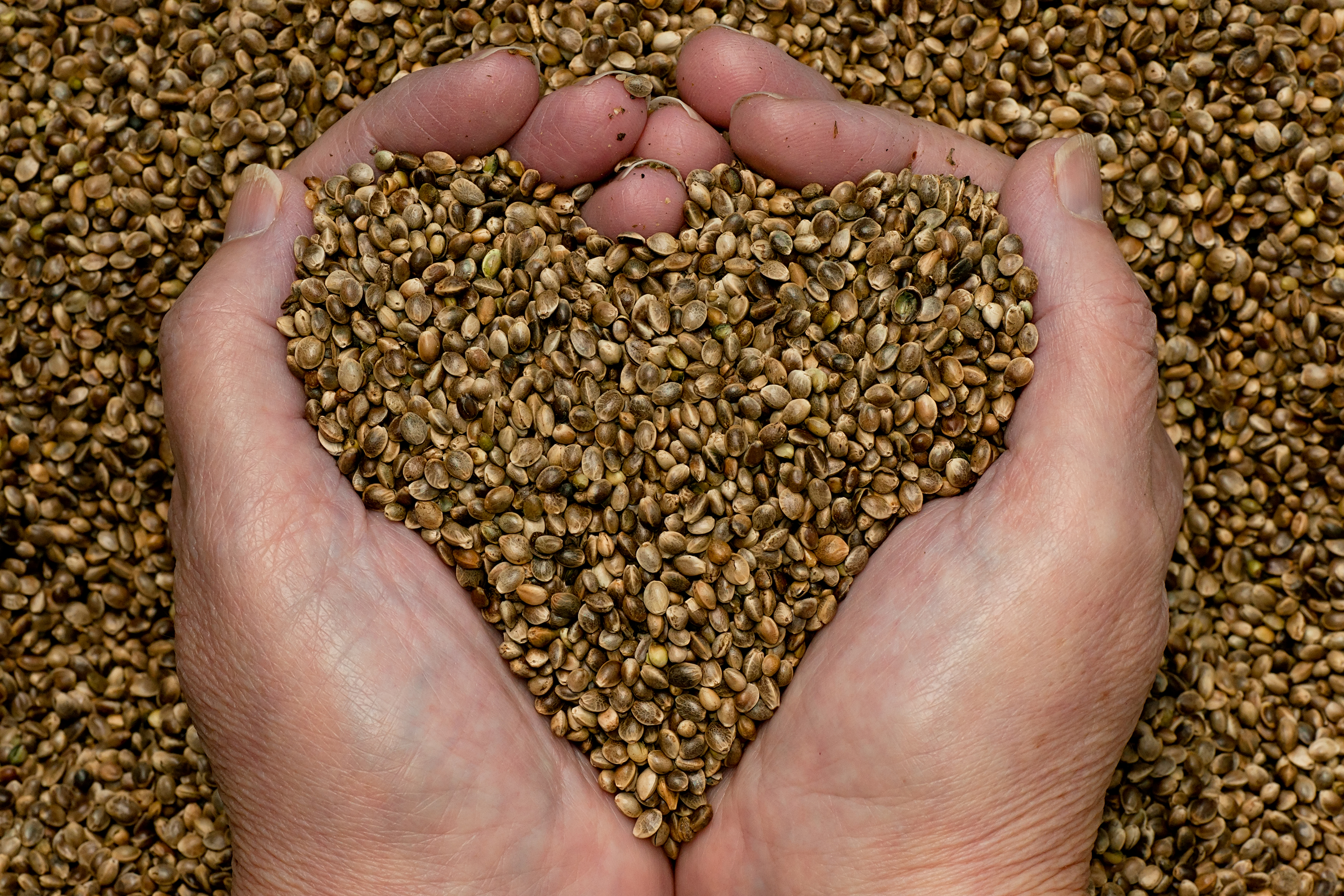 How Good is Hemp Seed For You? | One Regular Guy Writing ...
