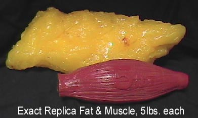 fat-v-muscle-1