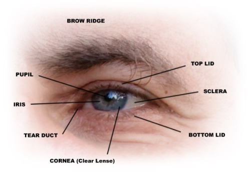 eye-parts