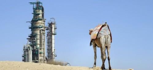 oil-refinery-camel-saudi-arabia-560x257