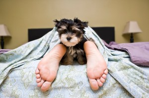 sleep_puppy_iStock_000015227531Medium