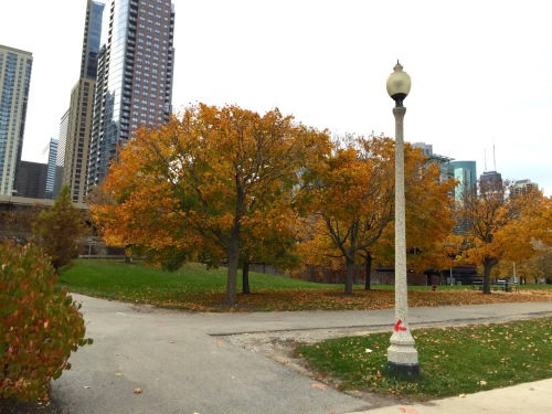 Some Fall color on the Lakefront last month with the city as a backdrop.