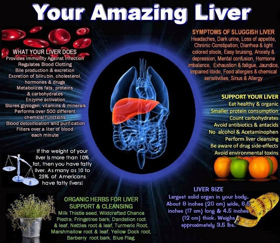 6 Facts About Your Amazing Liver Infographic One Regular Guy