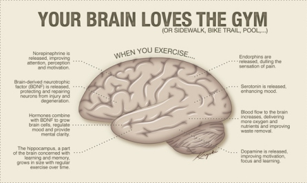 Image result for workout and brain
