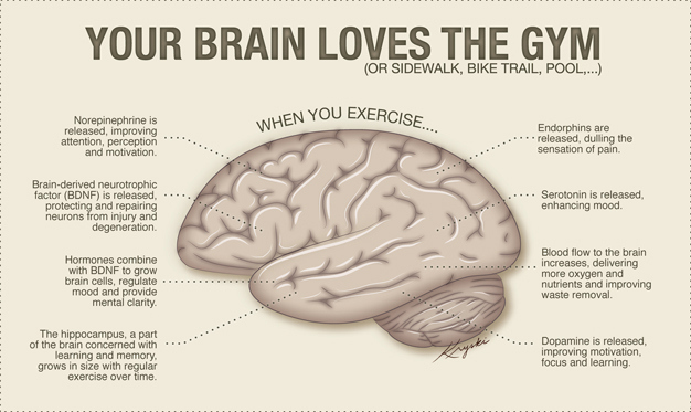 Image result for exercise and the brain