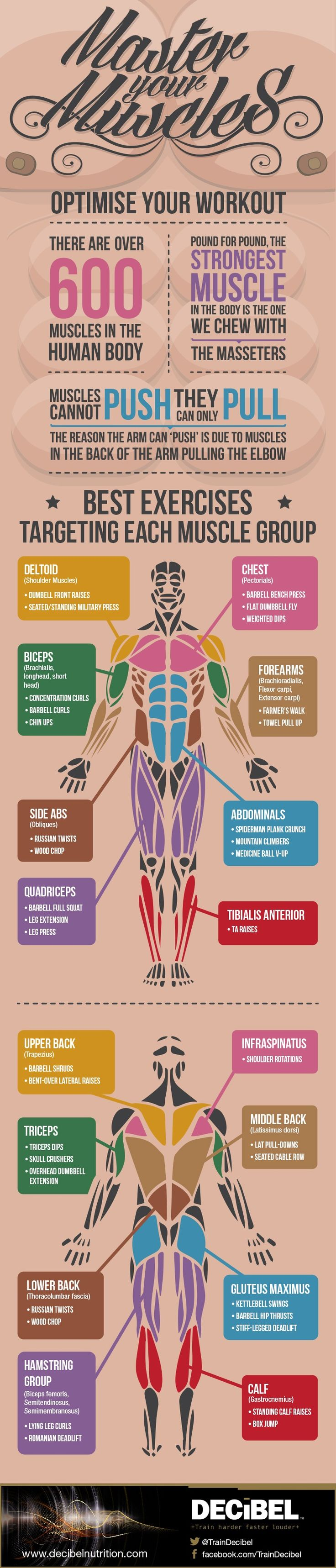 Muscle Chart One Regular Guy Writing About Food Exercise And