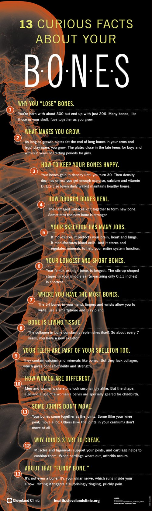 Curious-Facts-About-Your-Bones-infographic-722.jpg