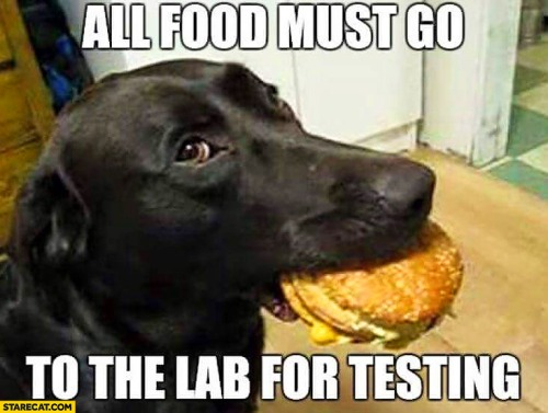 all-food-must-go-to-the-lab-for-testing-dog-with-a-burger.jpg