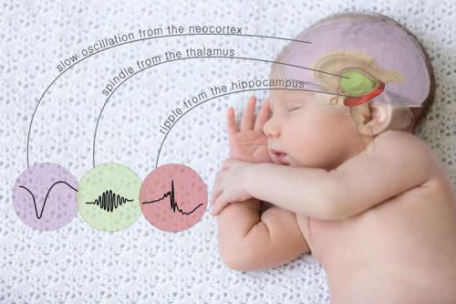 sleep-memory-brain-waves-neurosciencenews.jpg