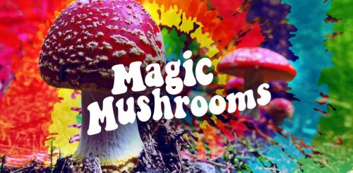magic_mushrooms_lead_image3