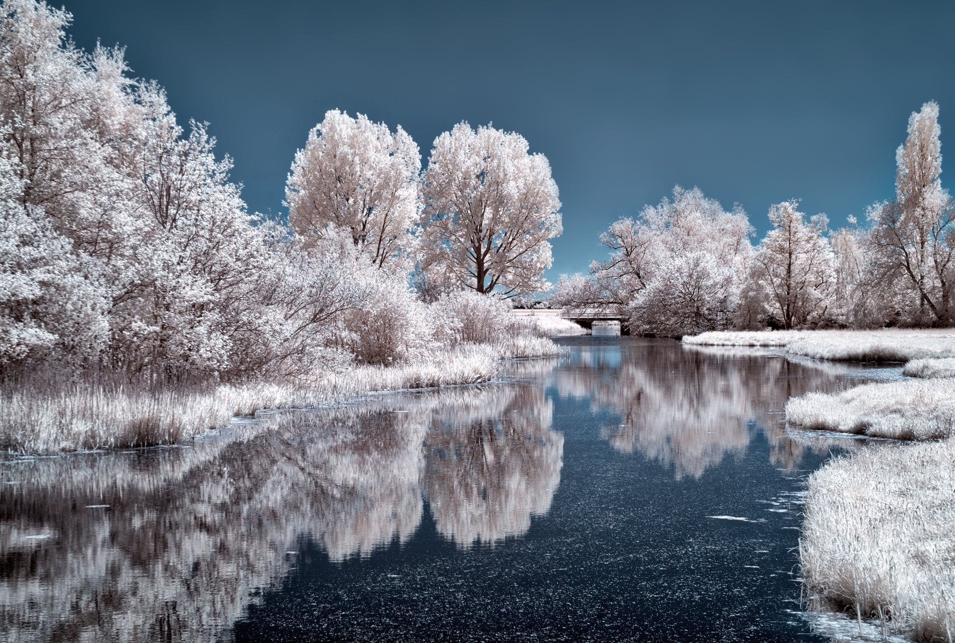 nature photography of river near trees