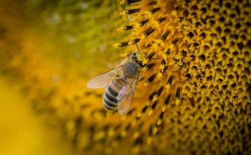 macro photography of a bee