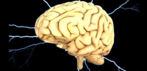 brain-18459401920.jpg