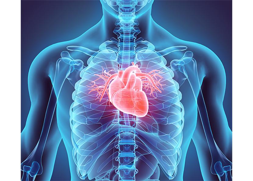 Human Heart.png