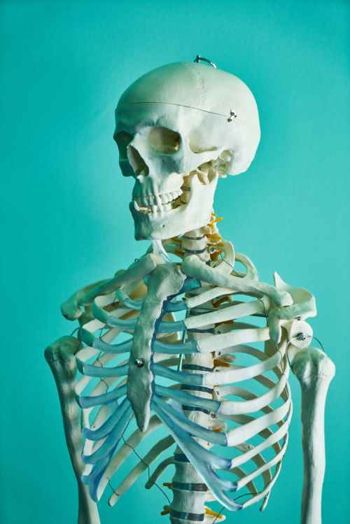 photo of skeleton