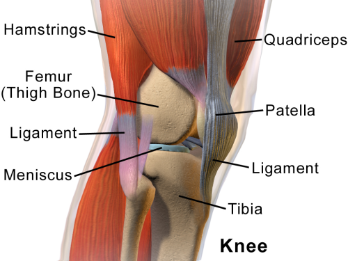 Blausen_0597_KneeAnatomy_Side.png